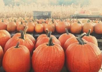 I Love October-